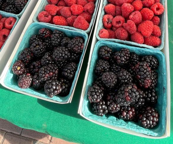 blackberries_finca_bonita