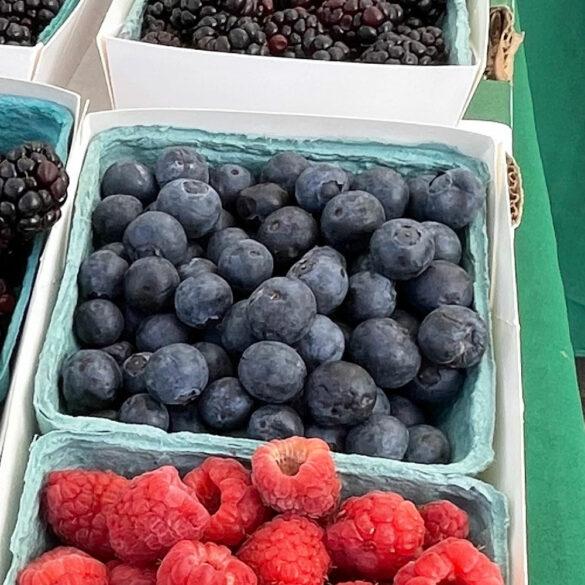 blueberries_finca_bonita