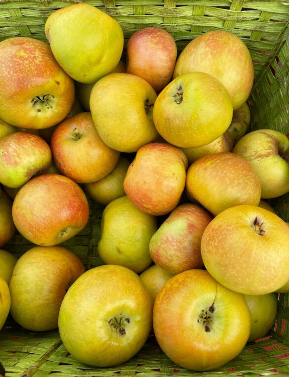 honey_crisp_apple-cuyama_orchards-1